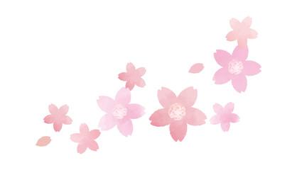 風に舞う桜