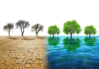 Dry country with cracked soil and water surface with trees. Concept of change climate or global warming.
