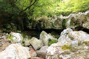 Foto op Aluminium Zwavel geel 제주 한라산 숲속의 아름다운 풍경이다.