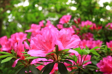Wall Murals Candy pink 제주 한라산 숲속의 아름다운 풍경이다.