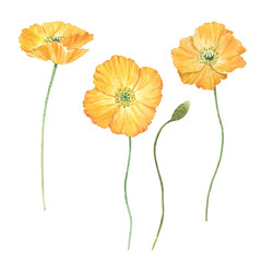 Obraz Beautiful bouquet composition with watercolor yellow poppy flowers. Stock illustration. - fototapety do salonu