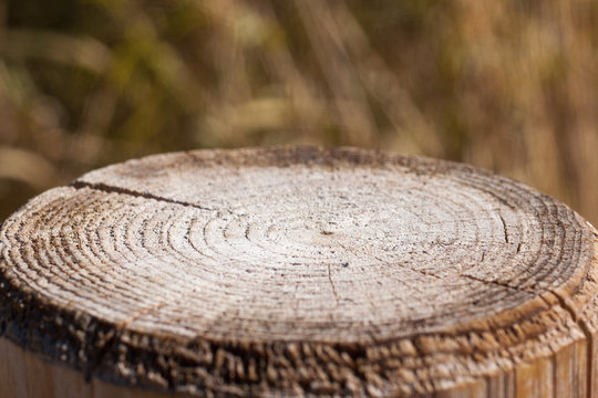 Close-up of cross section of tree trunk