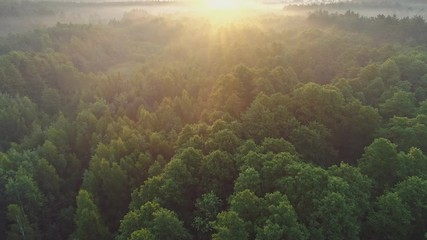 Wall Mural - Aerial view of spring green forest early in the morning. Flying over green trees forest at sunrise. Morning sun and fog. High quality shot, 4K