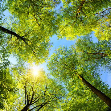 Green treetops, the sun and blue sky