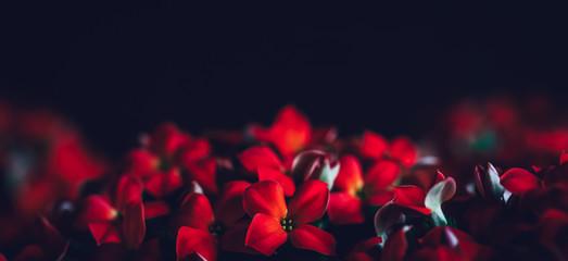 Red flowers panoramic border