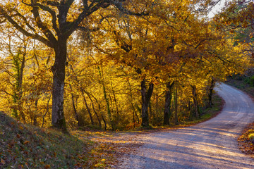 Aluminium Prints Autumn road in the woods with autumn colors in Tuscany