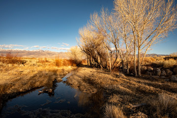stream in autumn winter morning landscape with bare trees