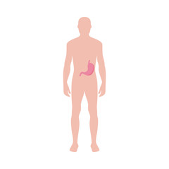 Male body with anatomical icon of stomach flat vector illustration isolated.
