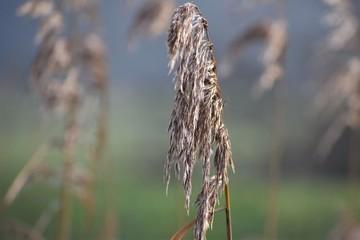 Photo sur Plexiglas Nature Natuur - Plant
