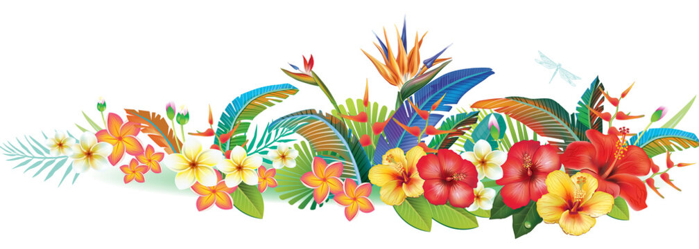 Border with tropical jungle plants and flowers