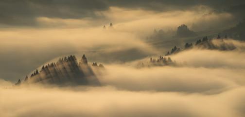 Pieniny trees foggy