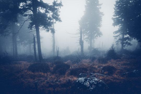 Dunkler Nebel in der Wildnis am Brocken im Harz