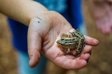 Frog in Kid's Hand