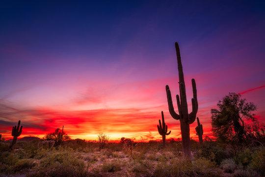 Arizona desert landscape with Saguaro cactus at sunset