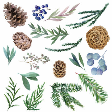 Set of winter watercolor botanical elements, fir and cones