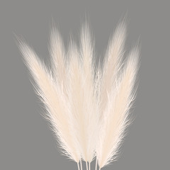 Pampas golden grass sheaf on grey. Vector illustration. panicle Cortaderia selloana bouquet South America. ornamental grass.
