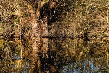 abstrakte Spiegelung von Bäumen und Sträuchern im See