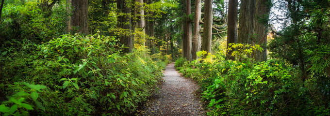 Poster de jardin Printemps Beautiful forest path as panorama background