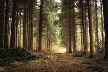 Papiers peints Gris traffic wschód słońca w lesie