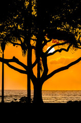 Fototapete - Palm and tropical trees silhouette on sunset tropical beach. Vacational background.