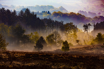 Poster Cappuccino misty countryside forest