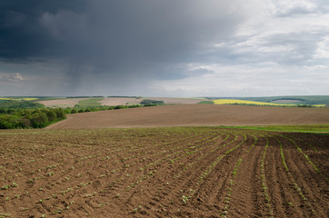Close up to the agriculture field in the storm