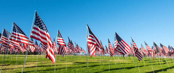 A large group of American flags. Veterans or Memorial day display Fotomurales