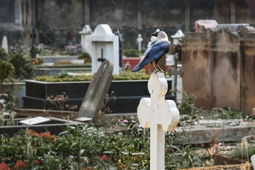 Crow on cross in Cemetery