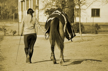 horse and rider are walking close together