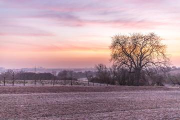 Sonnenaufgang in den Feldern Rheinhessens
