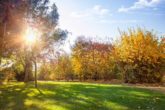 Autumn park, brightly lit by the sun. Yellow and orange trees, fallen yellow leaves and green lawn.
