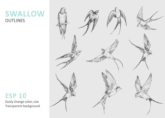Set of a flying swallows. Hand drawn illustration converted to vector. Outline with transparent background Fotomurales