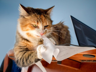 Cat shredding paper invoice. Concept for: tired of bills. The adorable calico kitten is sitting on a table with soft bokeh background.