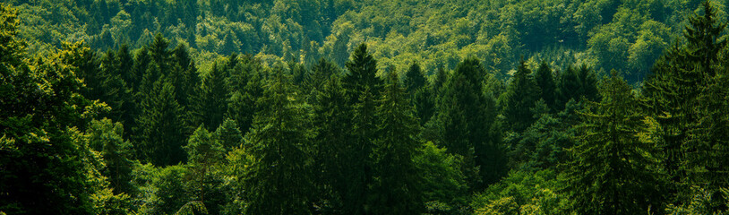 Dark green forest landscape
