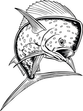 Dolphin Fish Vector Illustration
