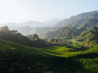 Vivid landscape shot of tea plantations