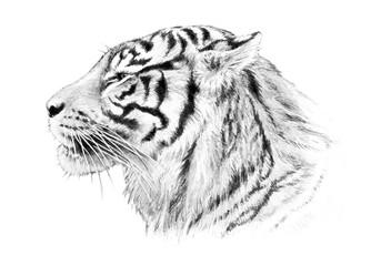Hand drawn tiger head illustration, striped jungle animal sketch isolated on white background, sumatran tiger