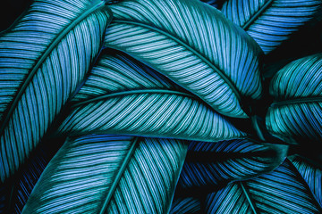 Keuken foto achterwand Natuur closeup tropical green leaves nature in the garden and dark tone background concept