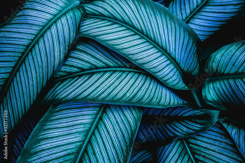 Wall mural green leaves nature  background, closeup leaves texture, tropical leaves