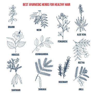 Collection of best ayurvedic herbs for healthy hair