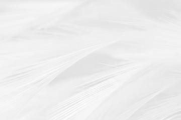 In de dag Zwaan Beautiful white feather wooly pattern texture background