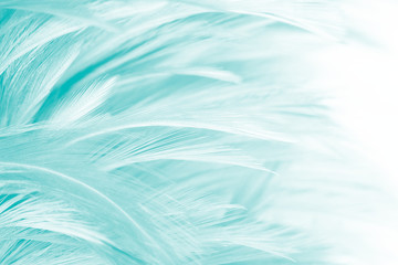 Wall Mural - Beautiful green turquoise vintage color trends feather pattern texture background