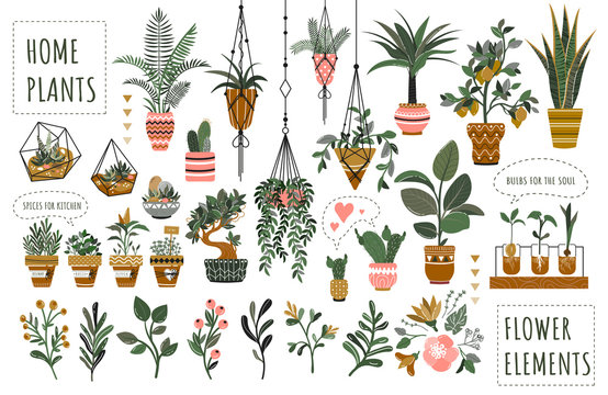Houseplants flowerpots isolated icons vector illustration. Decorative home plants, botanical icons and stickers. Flower pots and kitchen herbs, hanging plants, floral decorations collection.