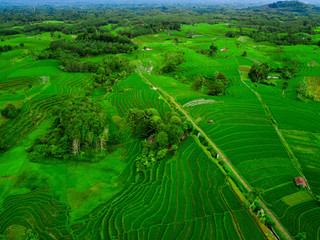 Wall Murals Green indonesia aerial view of panorama rice fields in asia