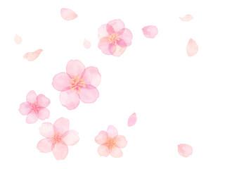 水彩 桜 花びら