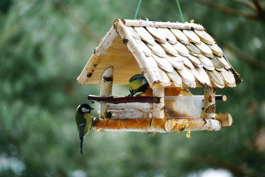 Birds eat from the feeder. Bird feeders. People help the birds.