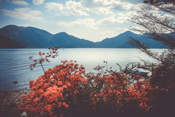 Red flowers around Chuzenji lake, Nikko, Japan