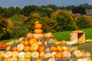 Pumpkins of different colors piled up on a meadow