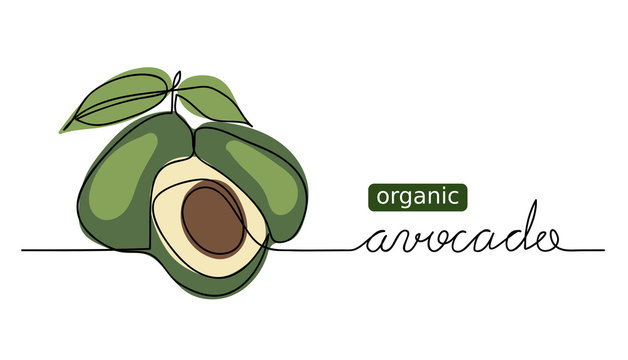 Organic avocado vector doodle, sketch. One continuous line drawing, background, banner, illustration of avocado.