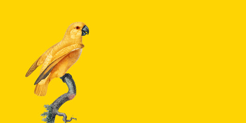 isolated on yellow background, best parrot pictures. copy space